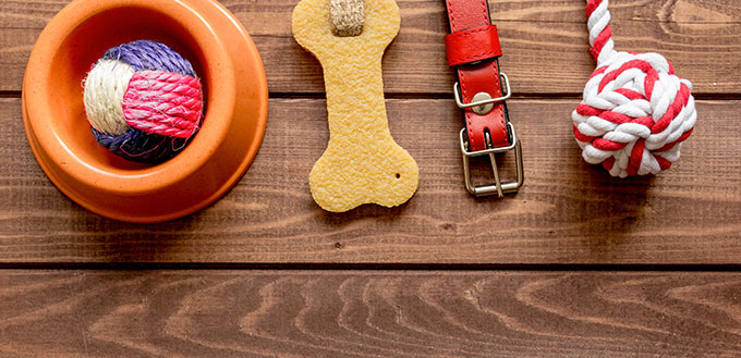 concept pet care and training on wooden background top view