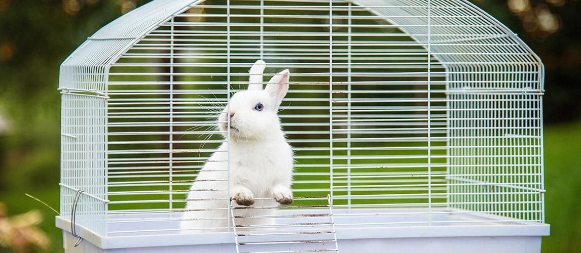 Best-Rabbit-Cages