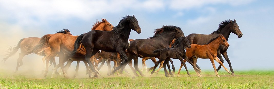 The-10-Best-Horse-Breeds-in-Detail