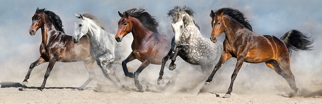 The 10 Best Horse Breeds in Detail