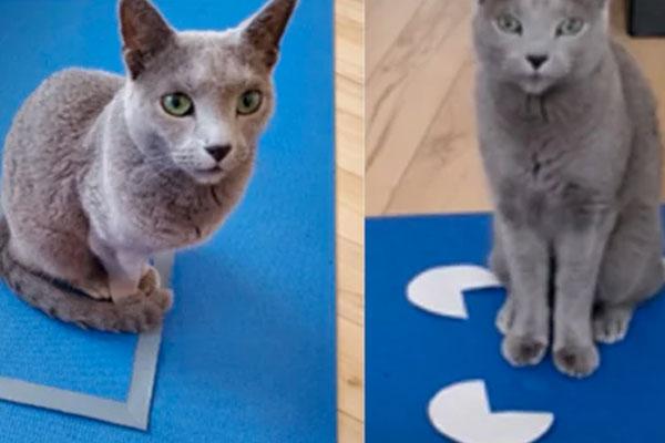 Deux chats sur tapis