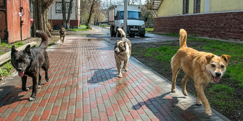America is Banning Dogs from Over 100 Countries from Entering the US