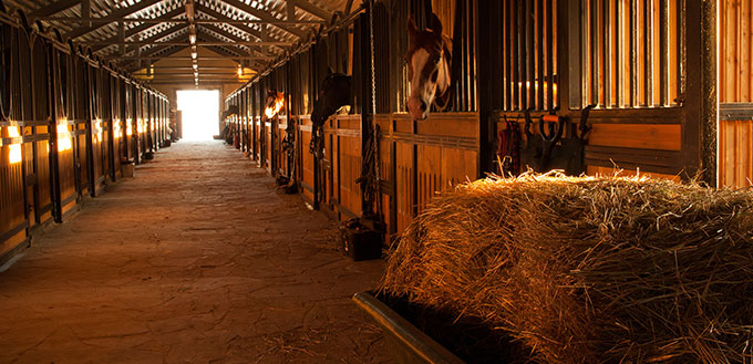 In the stable with horses in a equestrian center near russian city Kaluga.