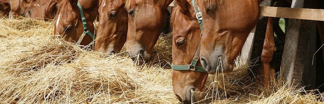 Types-of-Hay-for-Horses