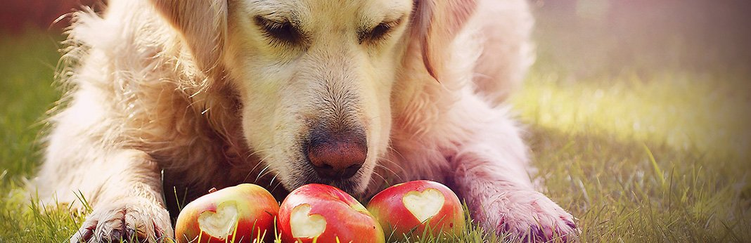 A Guide To The Fruit and Veg Your Dog Can and Can't Eat