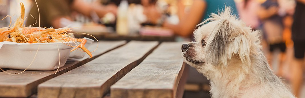 Human Foods Dogs Can and Can't Eat