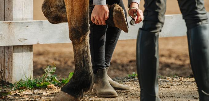 cleaning horse hoof