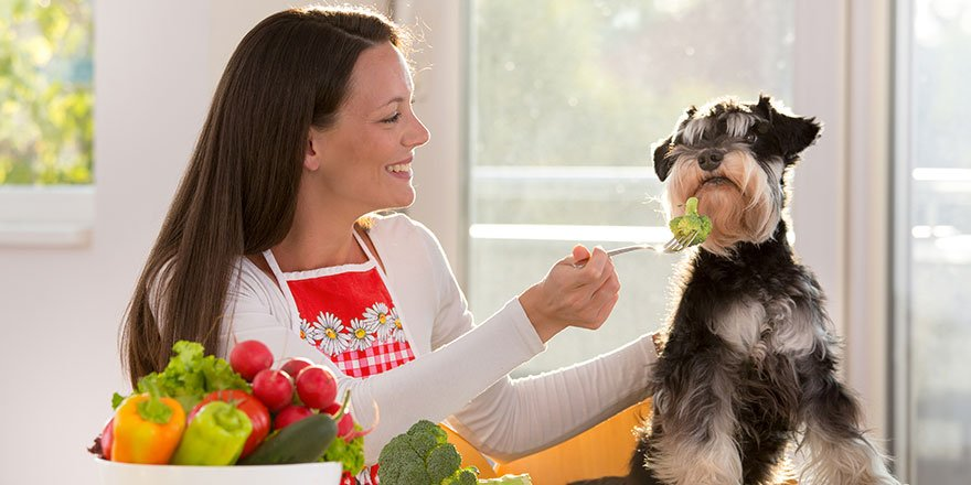Woman is feeding broccoli to a dog at dinning table