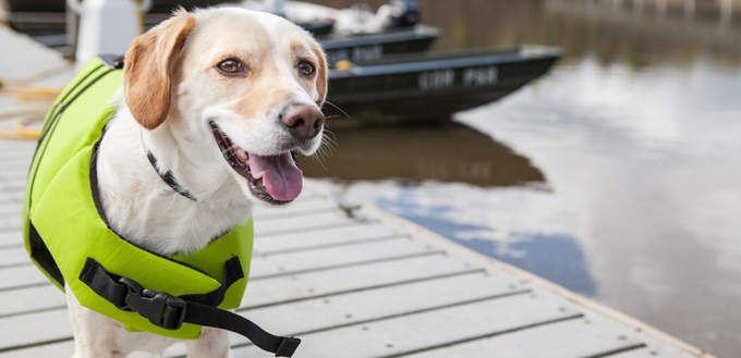 dog going boating