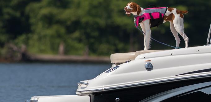 chien sur un bateau