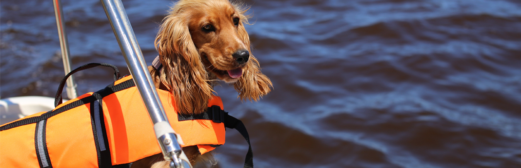 taking dog on a boat
