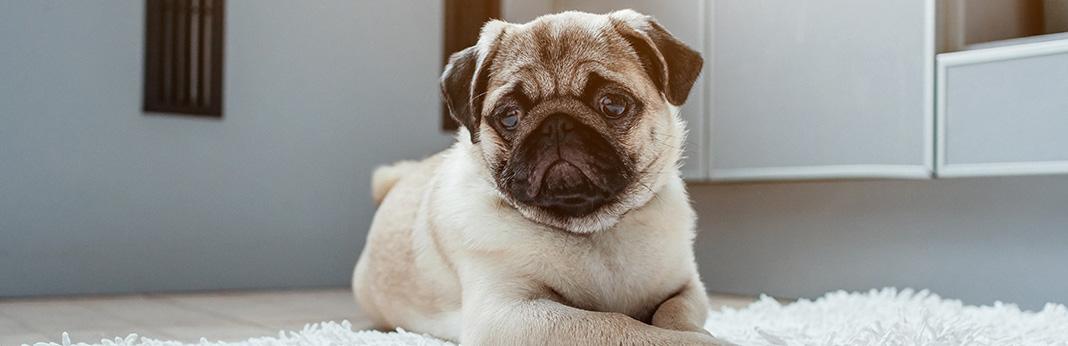 Dog Impulse Control: Teach Your Dog Self Control