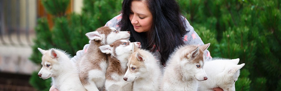 How-to-Avoid-Bad-Dog-Breeders