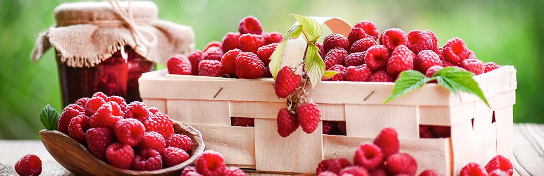 Juicy Fruit - Can Dogs Eat Raspberries?
