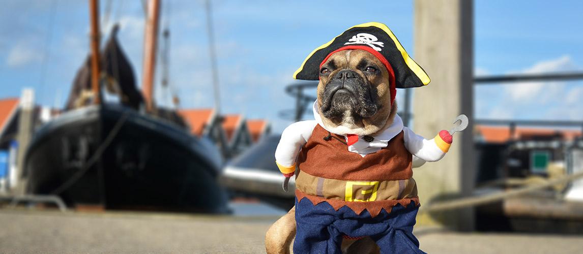 Best-Halloween-Dog-Costumes