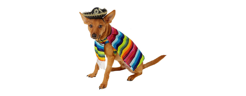 Best Small Dog Costume: Rubie's Costume Company Serape