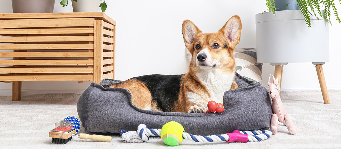 15-Fun-Filled-Disney-Dog-Toys-and-Accessories-For-Pets-to-Enjoy