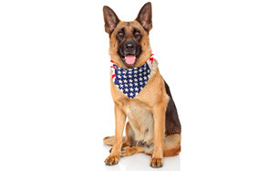 Costume Adventure USA Dog Bandana