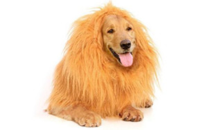 Lion Mane by Furry Fido