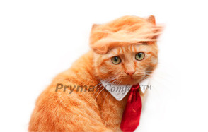 Prymal Comfort Trump Cat Costume