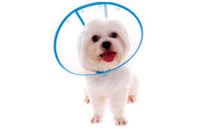 IN HAND Adjustable Recovery Dog Cone