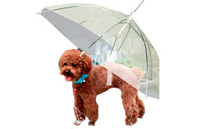 Moore Transparent Umbrella with Built-in Leash