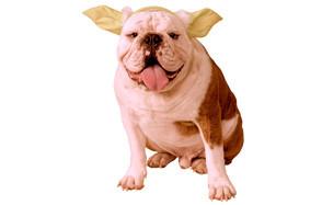 Star Wars Classic Yoda Dog Headpiece