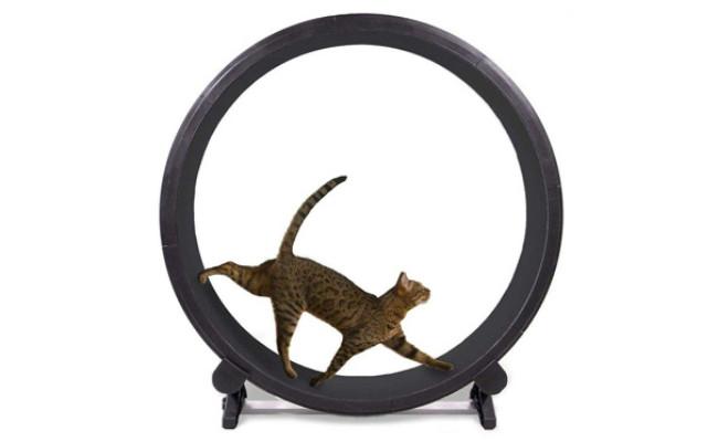 AWYLL Cat Exercise Wheel