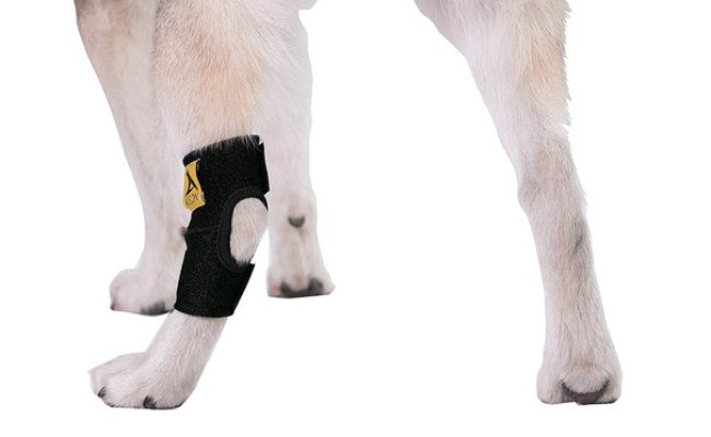 Agon Dog Knee Brace