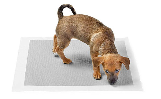 AmazonBasics Carbon Pee Pads for Dogs
