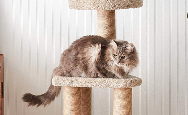 AmazonBasics Cat Activity Scratching Tower