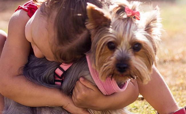 Arava - Dead Sea Pet Spa Dog Wipes