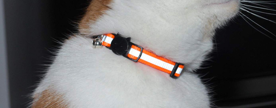 Bemix Pets Reflective Cat Collar