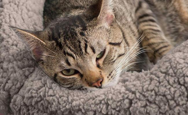 Best Friends by Sheri Heated Cat Beds