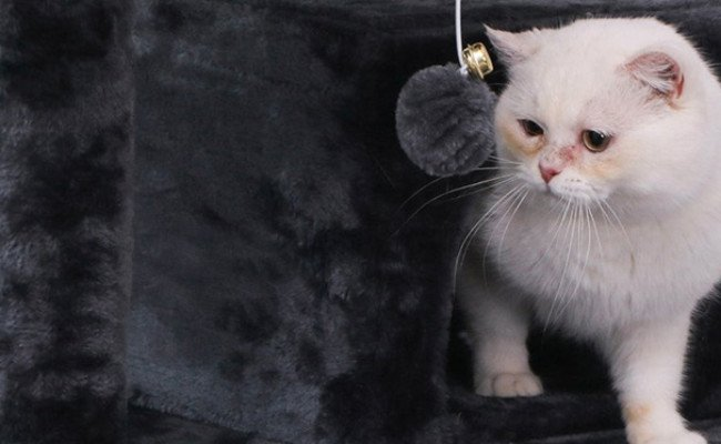 Bewishome Cat Tree Condo
