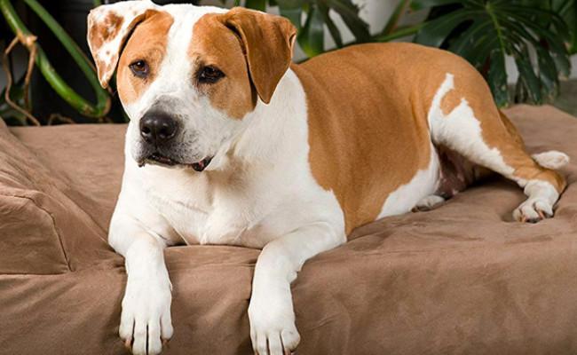 Big Barker Orthopedic Dog Bed