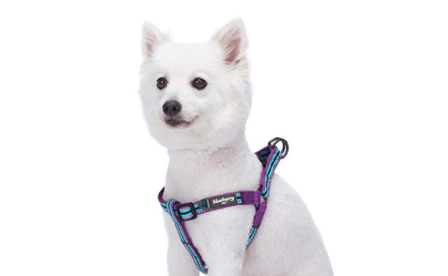 Blueberry Pet Multi-Colored Dog Harness