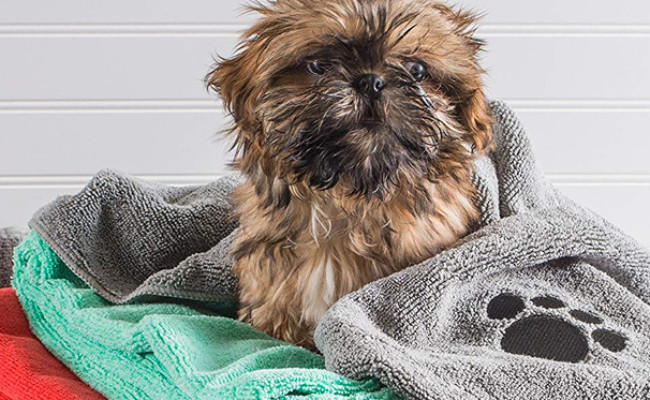 Bone Dry Microfiber Dog Bath Towel