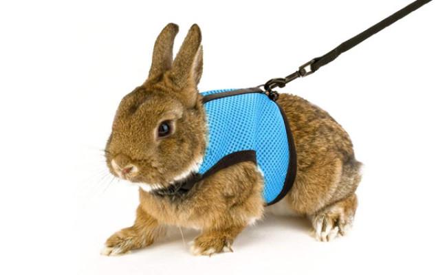 Calunce Soft Rabbits Harness