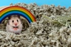Carefresh Complete Hamster Bedding