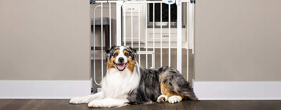 The Best Dog Gates Review In 2019 My Pet Needs That