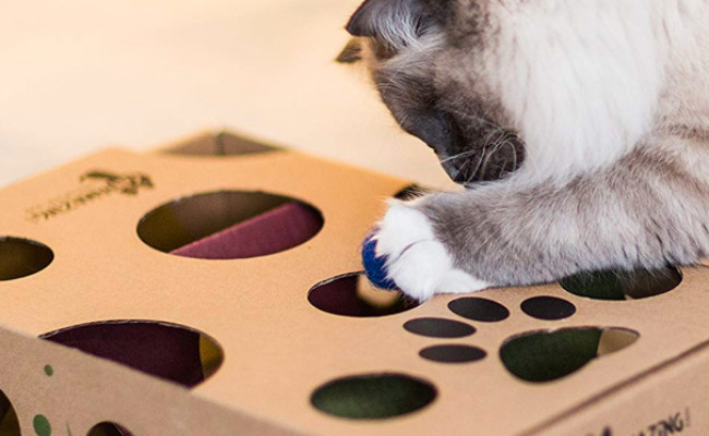Cat Amazing Interactive Treat Maze & Puzzle Feeder