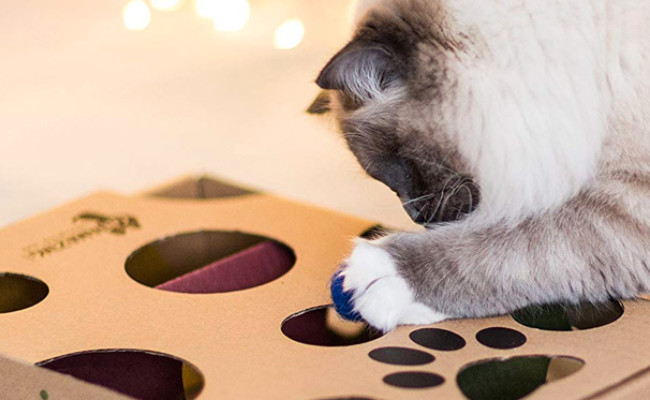 Cat Amazing Maze & Puzzle Feeder for Cats