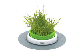 Catit Grass for Cats
