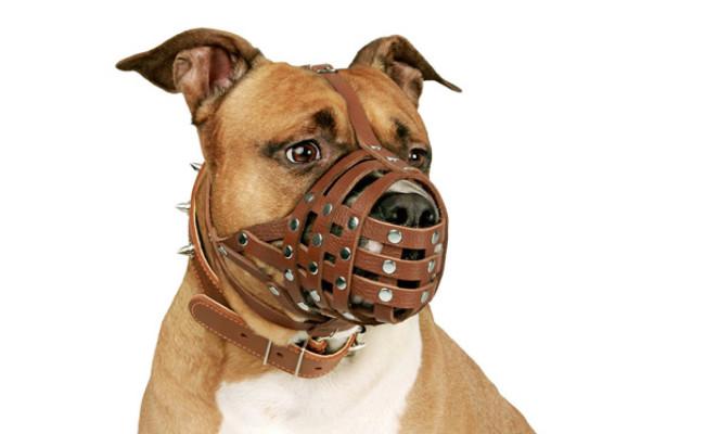 CollarDirect Leather Dog Muzzle