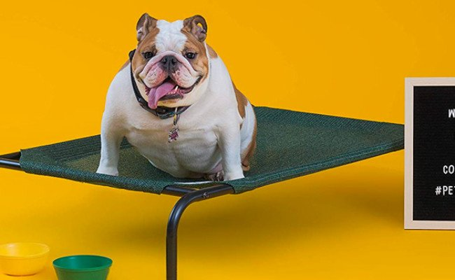 Coolaroo Elevated & Indestructible Dog Bed