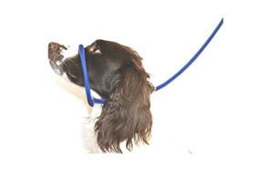 Dog & Field Figure 8 Anti Pull Leash Halter