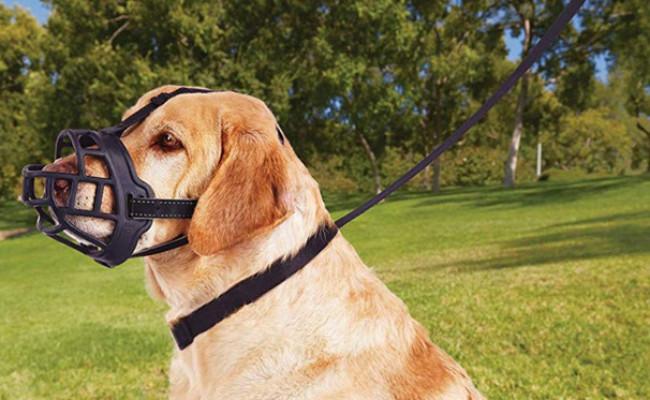Barkless Soft Basket Silicone Muzzles for Dog