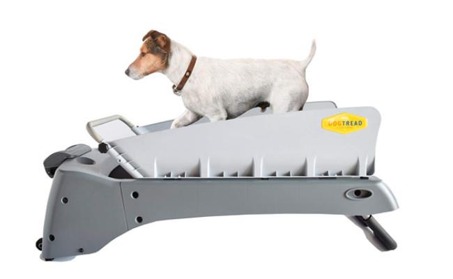 DogTread Small Dog Treadmill