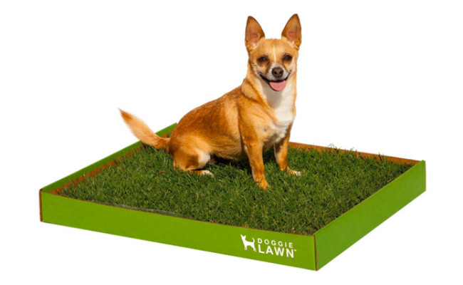DoggieLawn Real Grass Dog Potty